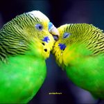 طوطی های سبز