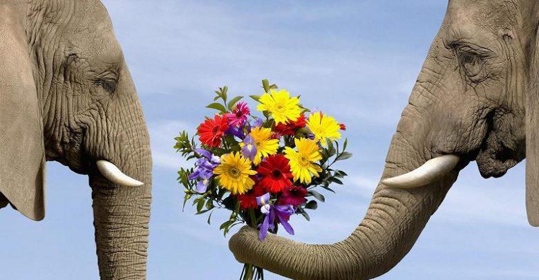 دوستی فیلها