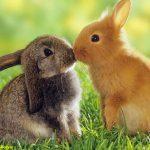 خرگوشهای رنگی
