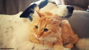 Kindness in animals
