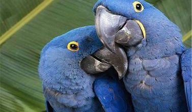 Photo of نقاشی های زیبای پرندگان