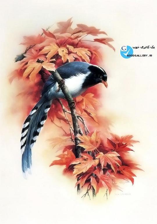مجله گالری عکس ، گالری عکس پرندگان