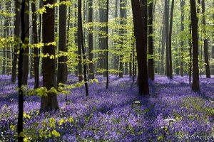 گلهای جنگلی