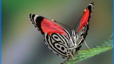 Photo of پروانه ای به نام ۸۹ (عکس)