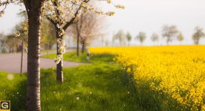 Photo-spring