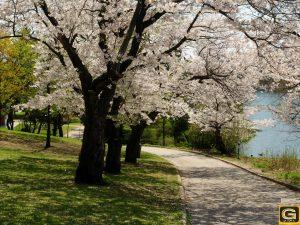 عکس های بهار زیبا