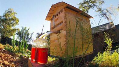 Photo of کندوی زنبور جدید+تصاویر