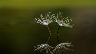 Photo of بازتاب های زیبا در طبیعت