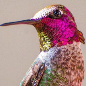 تصاویر بینظیری از پرندگان