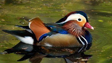 Photo of عکس های تماشایی از پرندگان
