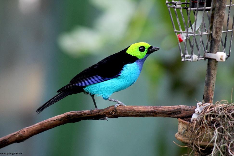 عکس های تماشایی از پرندگان زیبا و دیدنی
