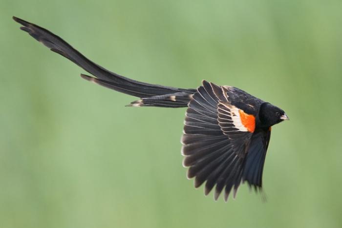 عکس های تماشایی از پرندگان