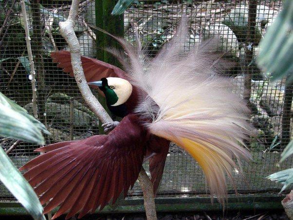 عکس های تماشایی از پرندگان ریبا و دیدنی