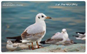 مجله گردش خوب - سفر به دریاچه چیتگر