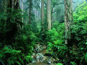 جنگل های بارانی آمازون ( Amazon rainforest )