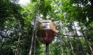 خانه های لوکس در نوک درختان