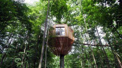 Photo of خانه های لوکس در نوک درختان